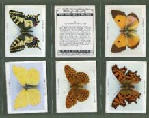 Tobacco cigarette cards Butterflies & Moths 1938 set